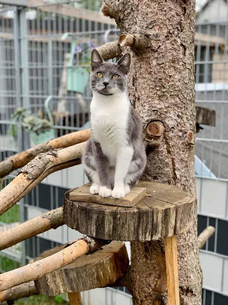 AllesfuerdieKatz DrBaum Aussengehege mit Katze