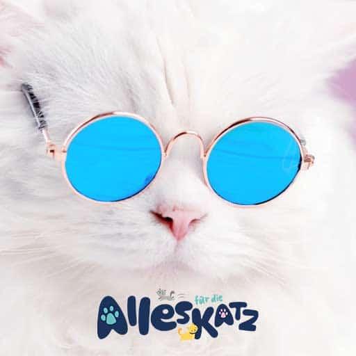 Alles für die Katz Sabi´s Katzenpension